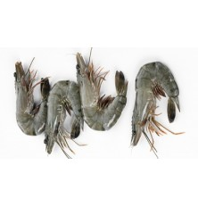 Crevettes Tigrées  Entieres Crues