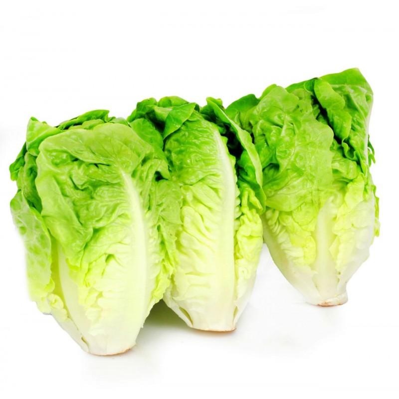 Salade Coeur De Sucrine