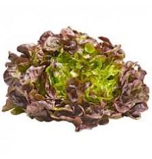 Salade Feuille De Chene
