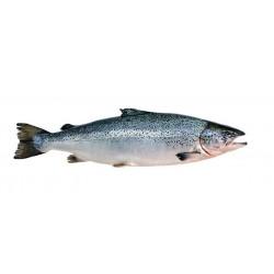 Saumon entier Ecosse label rouge