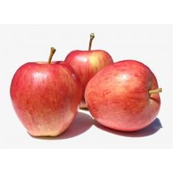 Pomme Rouge royal Gala 1kg