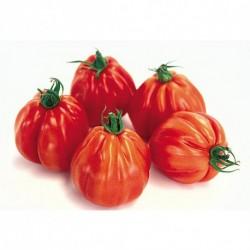 Tomate Grosse