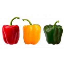 Poivrons tricolores