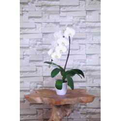Orchidée 1 tige avec pot
